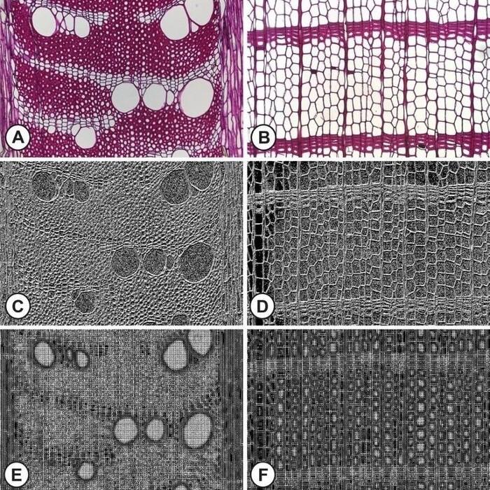 Mikroskopaufnahmen von Hölzern