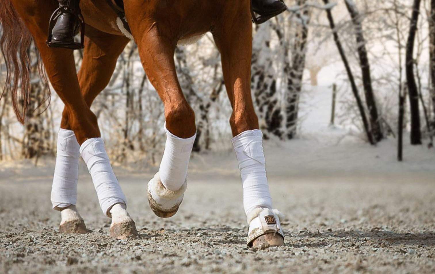 Magnesiumchlorid bei Pferden