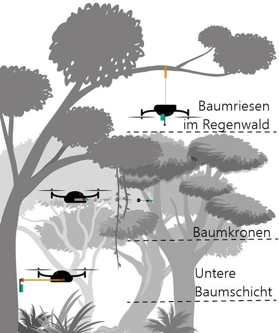 Grafik Drohnen statten Bäume mit Sensoren aus