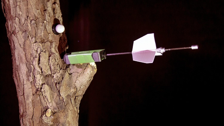 Sensor-Pfeil in einem Baum in der Flugarena beim Nest