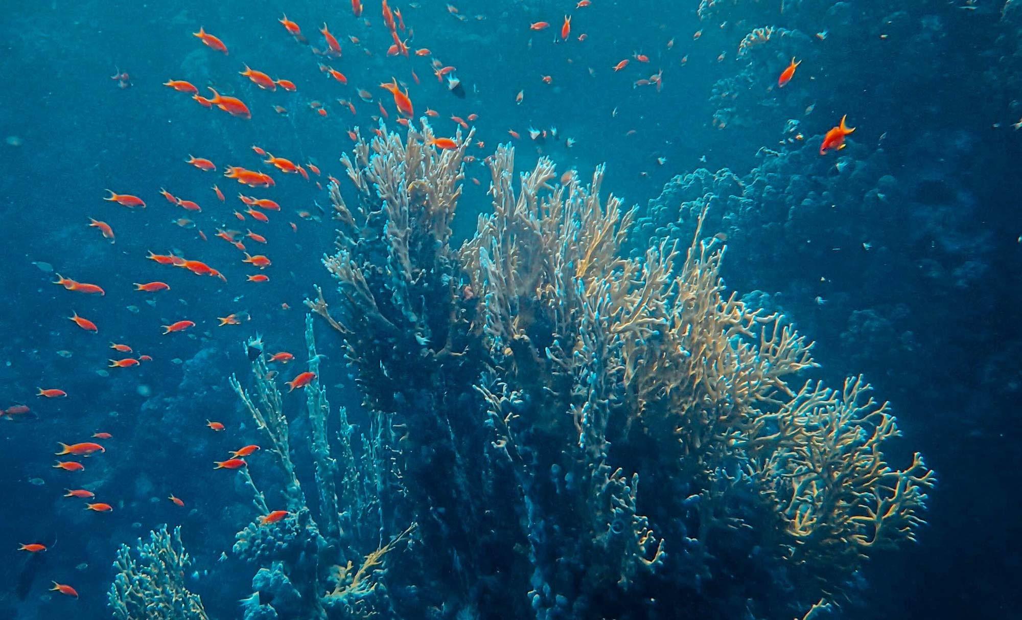 Korallenriff (Symbolbild)