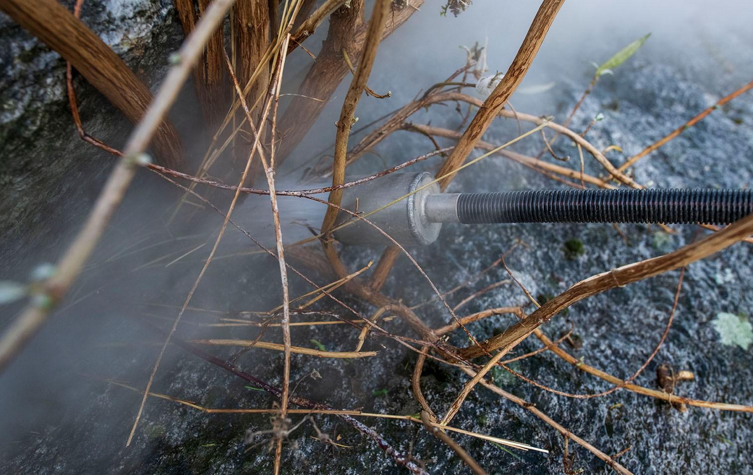 Sommerflieder-Bekämpfung mit kochendem Wasser