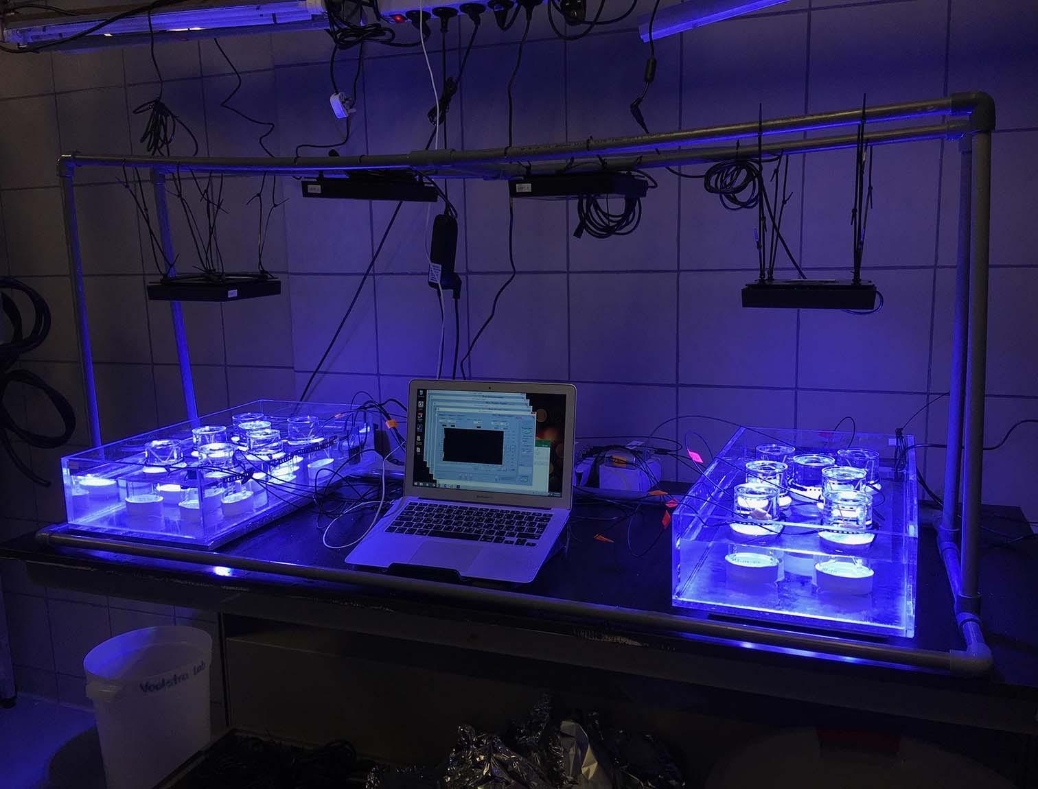 Labor-Analyse von Korallen