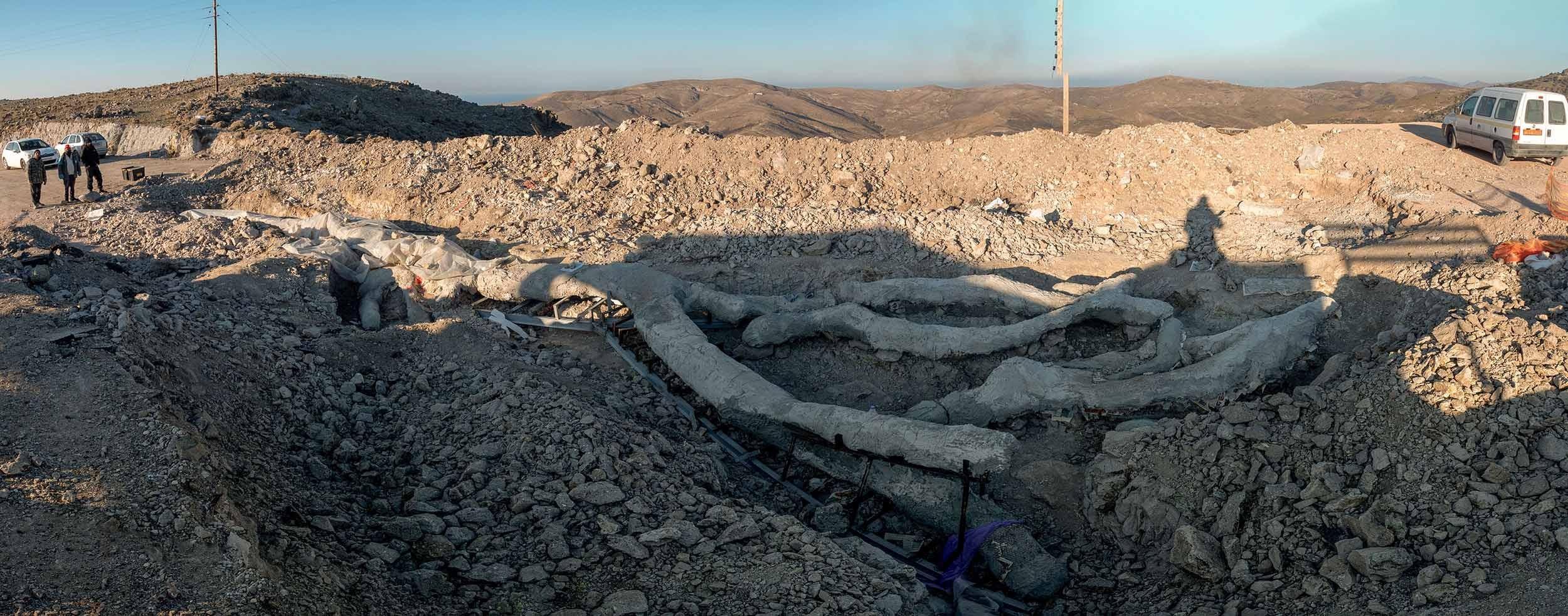 Versteinerter Baum in Lesbos