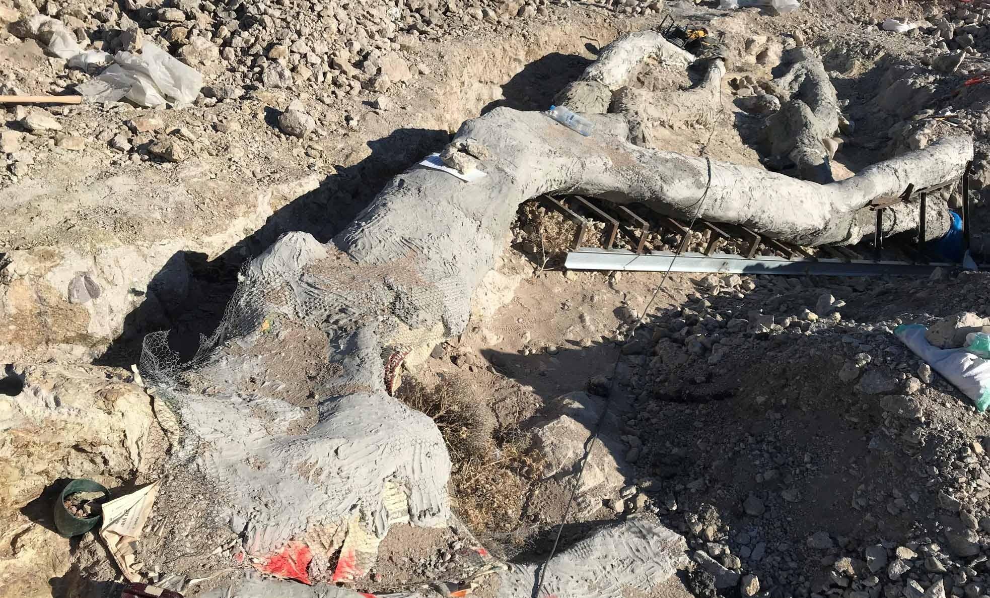 Ausgrabung Versteinerter Baum in Lesbos