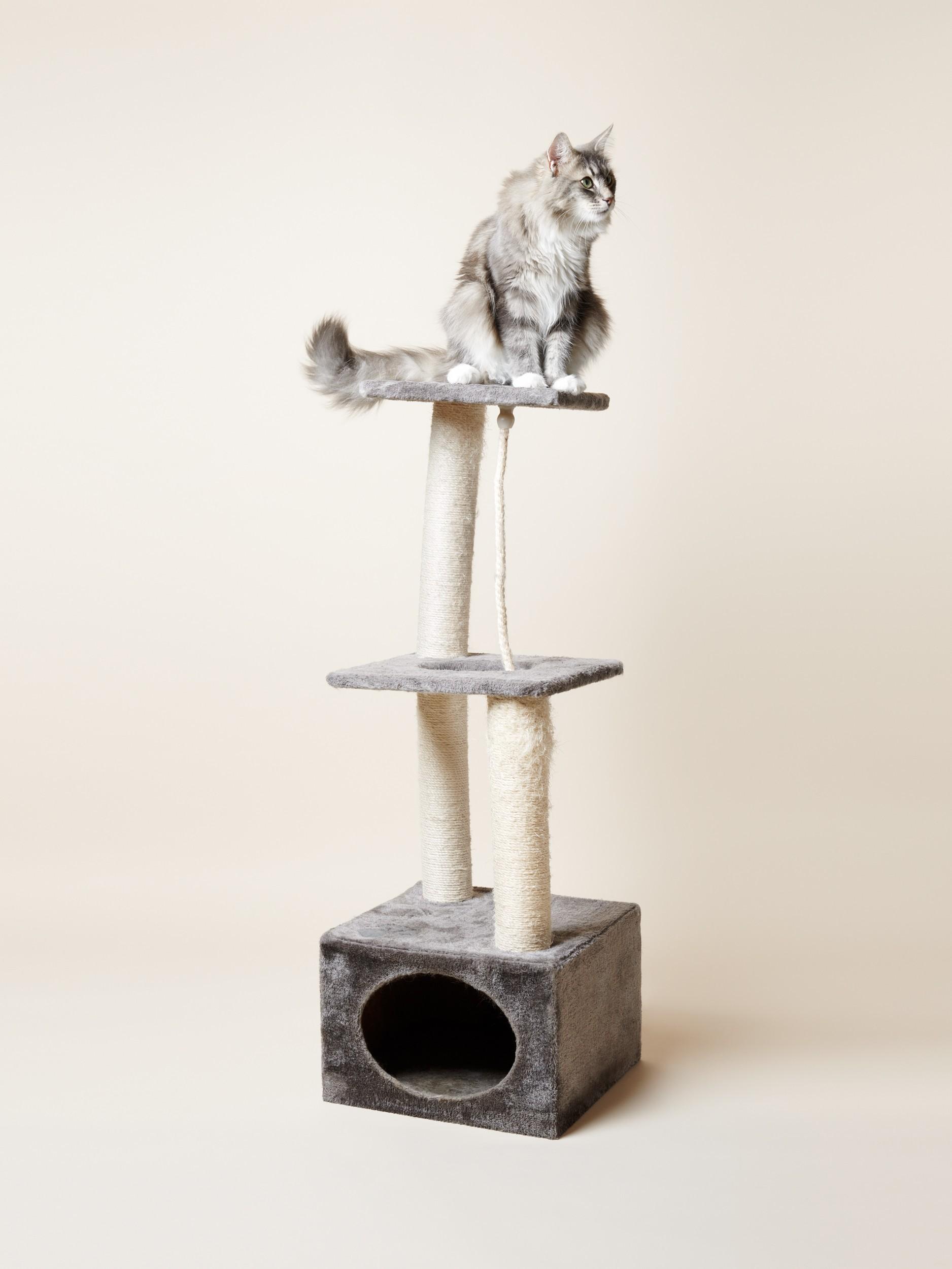 Katze Kratzbaum Pascale Weber