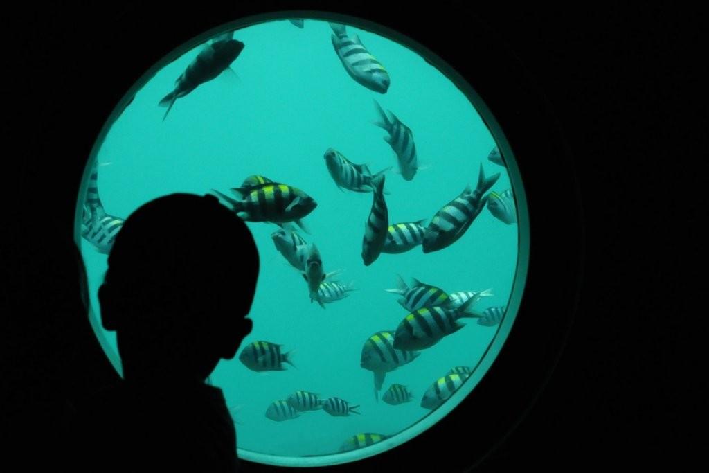 Fische im Ashizuri-Tower in Kochi