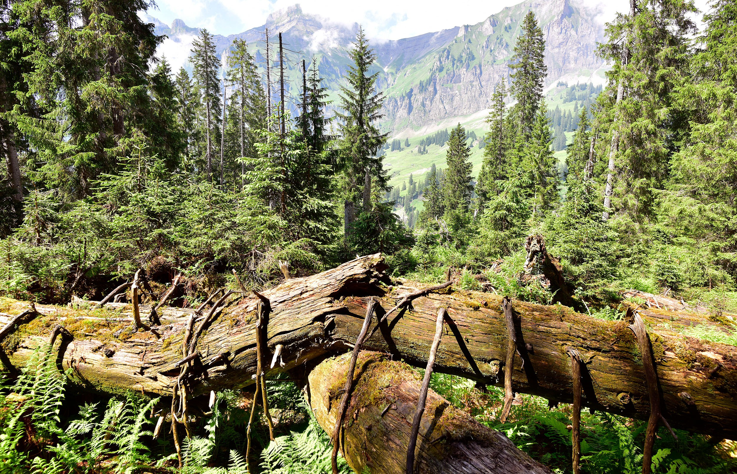 Bödmerenwald