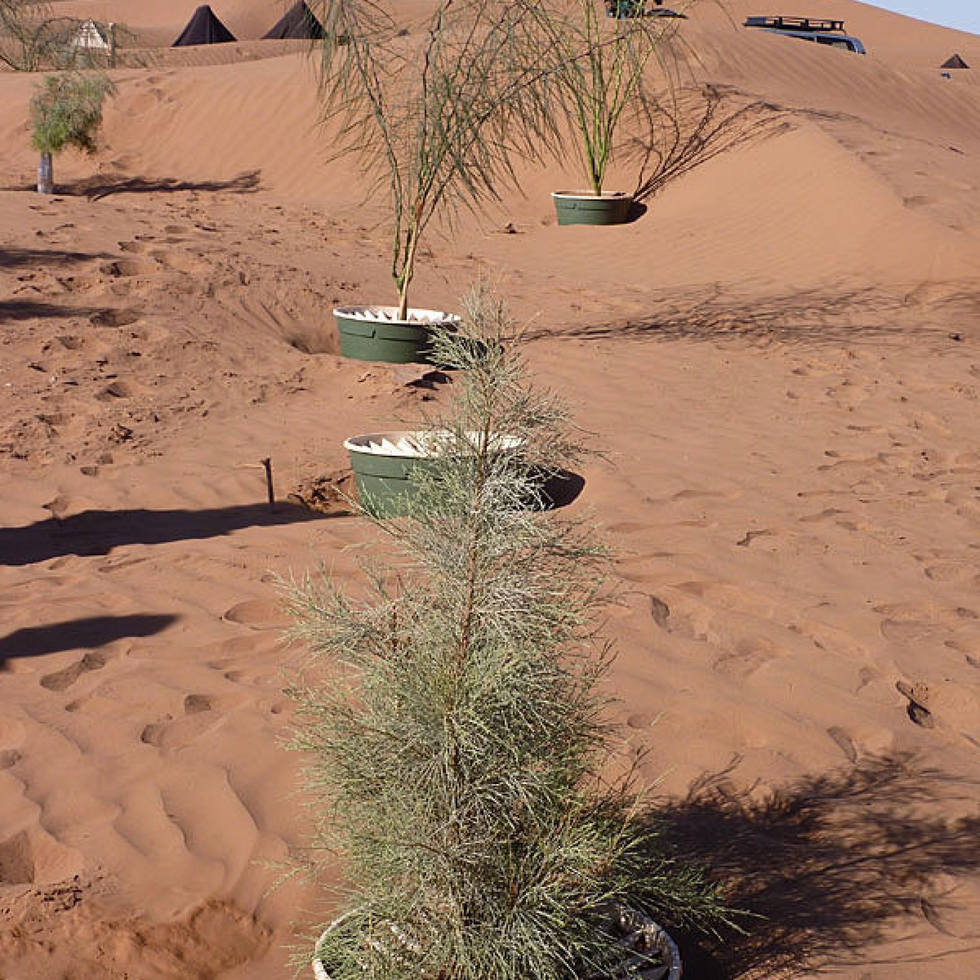 Einsatz der so genannten Waterboxx aus Polypropylen zur Aufforstung in einem Wüstengebiet. Die neue Greenbox ist hingegen aus recyceltem Papier hergestellt, biologisch abbaubar und verbraucht noch weniger Wasser. (Bild: zvg)