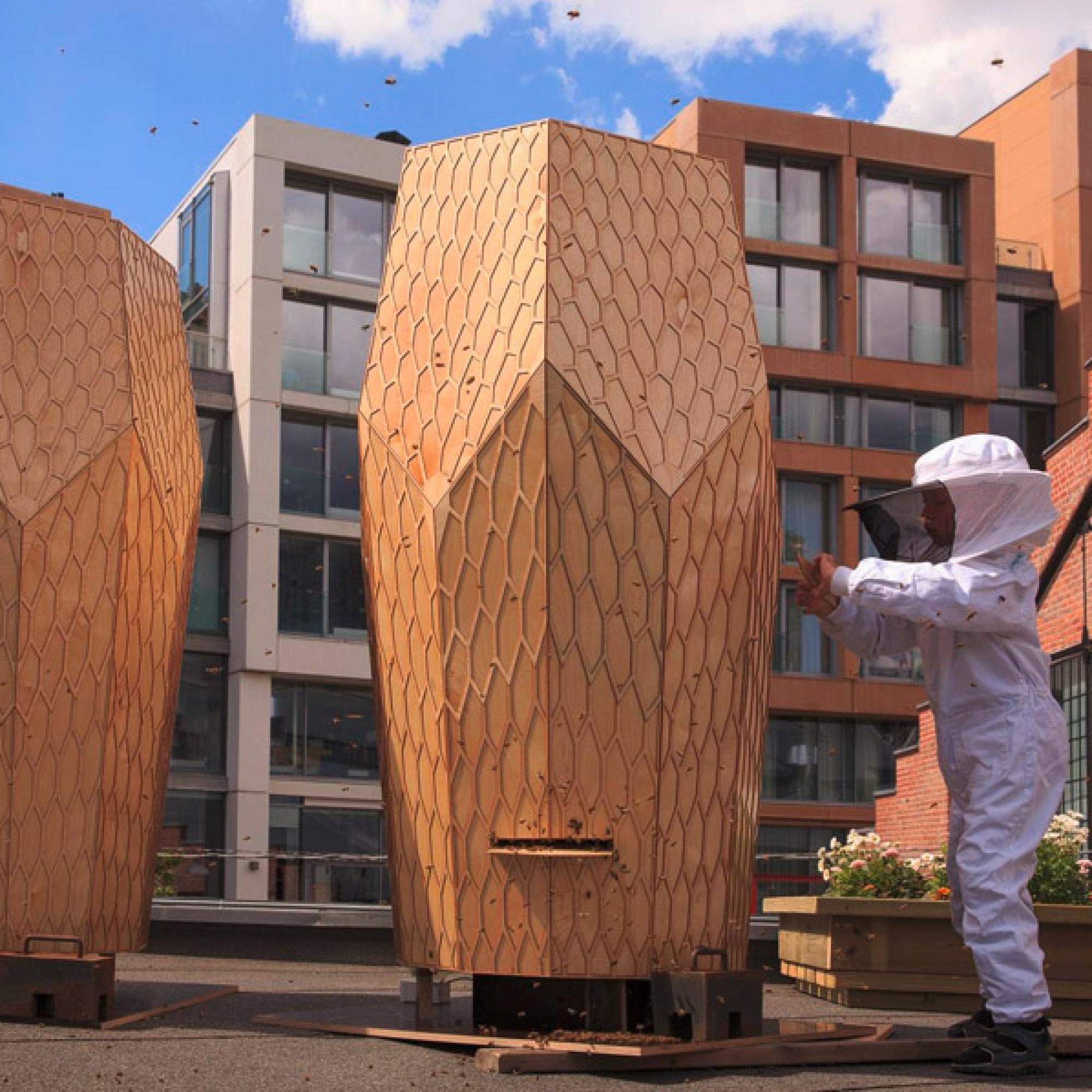...und sollen Bienen helfen, sich in der Stadt anzusiedeln. (PD)