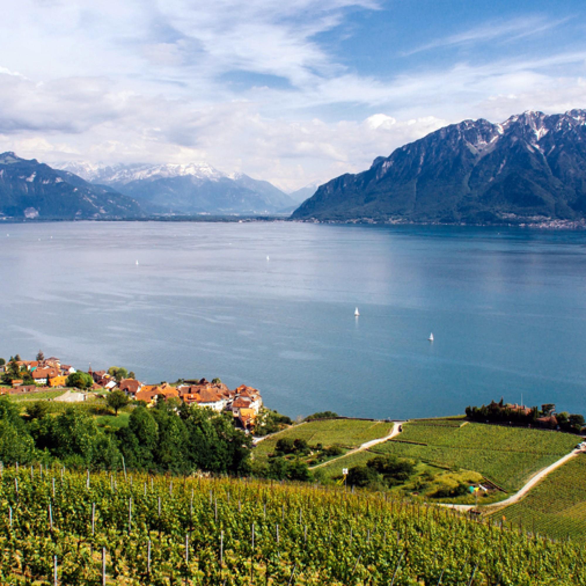 Wer im Lavaux. an den Ufern des Genfersees wohnt, lebt fast ideal: Die Stadt - Genf oder Lausanne - ist nicht allzuweit weg und grandiose Aussicht auf See und Berge sind ebenfalls gewährleistet. (Damian Zech, flickr, CC)