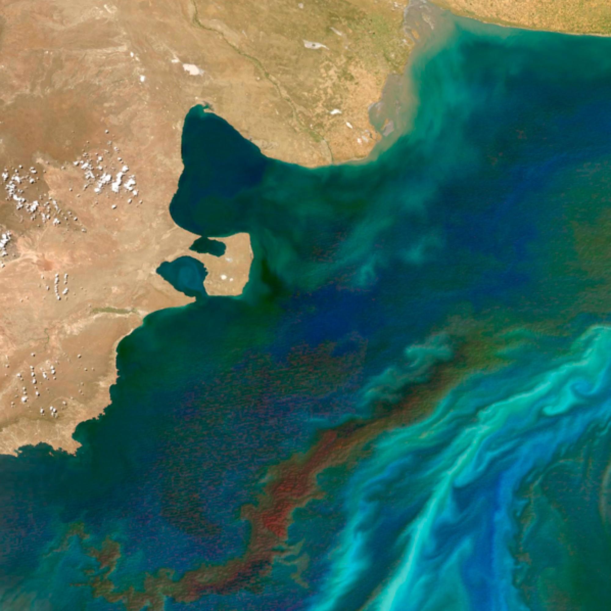 An der Küste Argentiniens  wird es bunt: Im Sommer blühen dort die Pythoplanktons und sorgen zusammen mit den Strömungen für ein grünt-türkis-blaues Farbenspiel. (nasa.org)