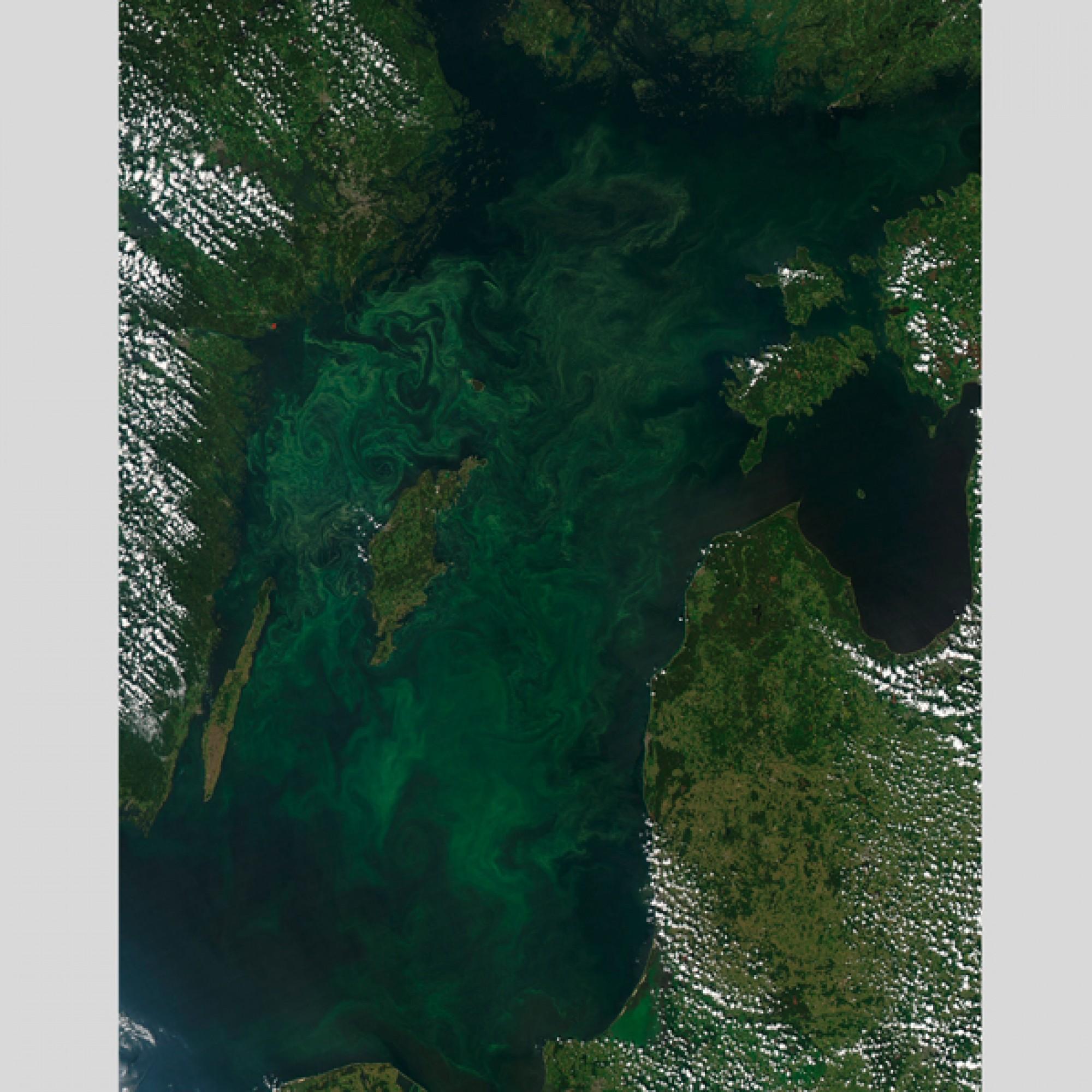 Und für eine Symphonie in dunkelgrün und tiefblau sorgen die Algen in der Baltischen See. (Nasa)