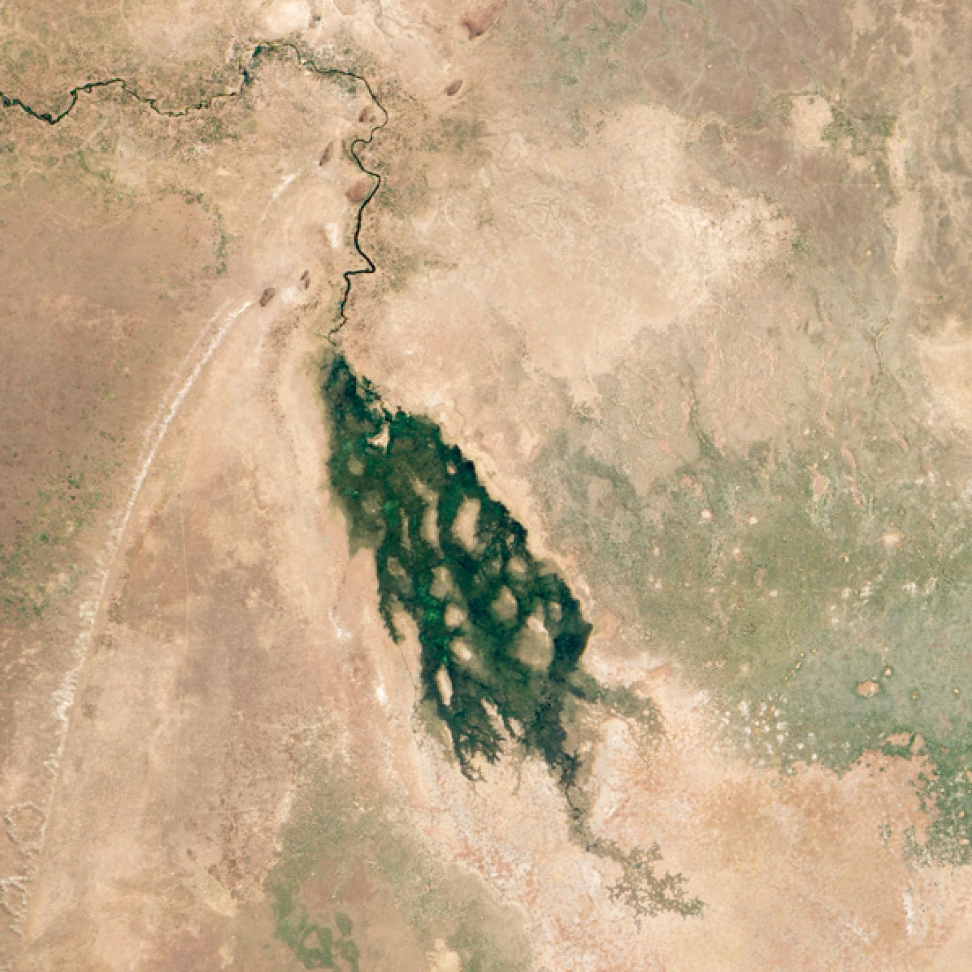 Ein grünes Juwel mitten in der Kalahari-Wüste: das Okavango-Delta. (Nasa)