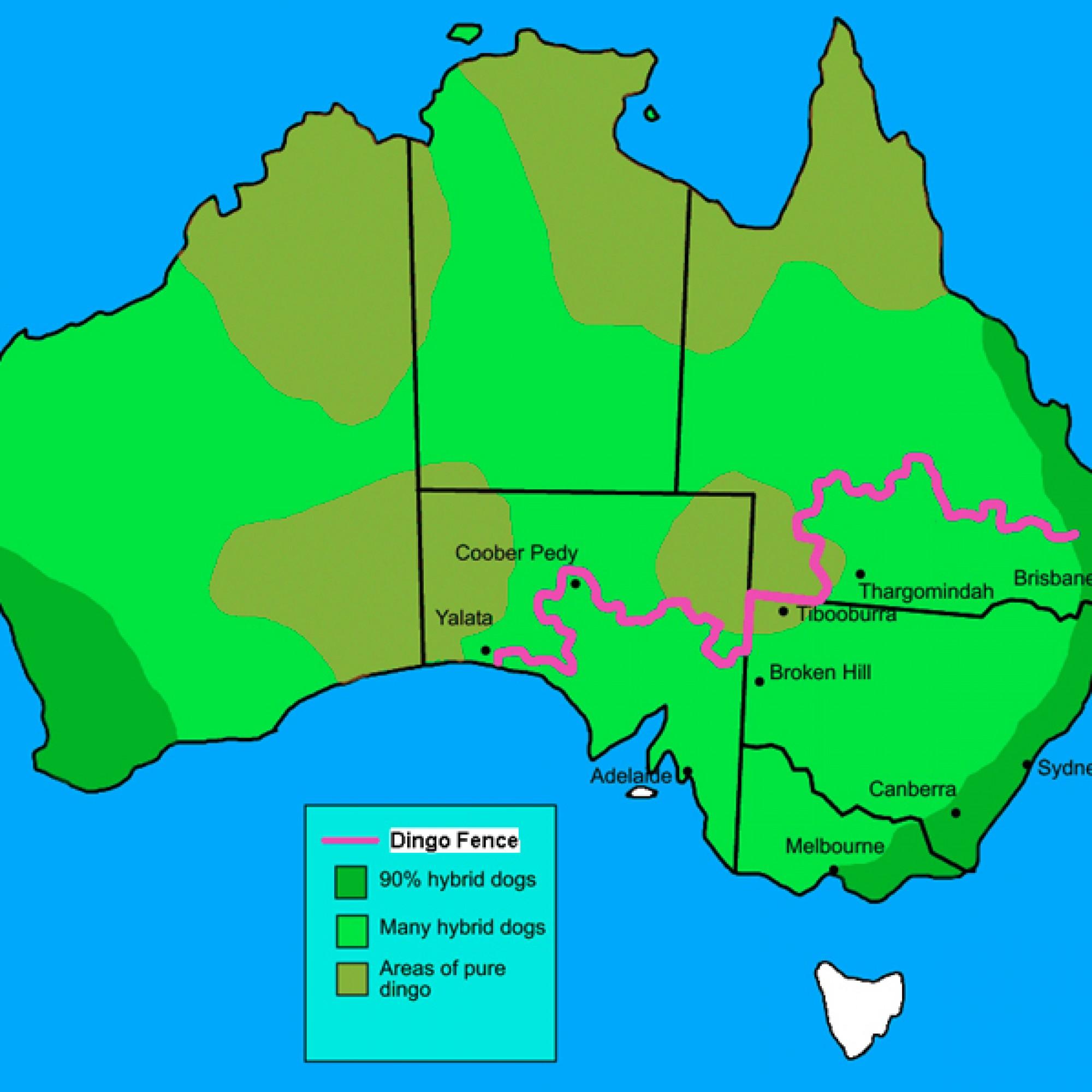 Der Riesenzaun trennt die Südspitze Australiens vom Rest des Landes. (Roke-commonswiki,CC BY-SA 3.0, Wikimedia)