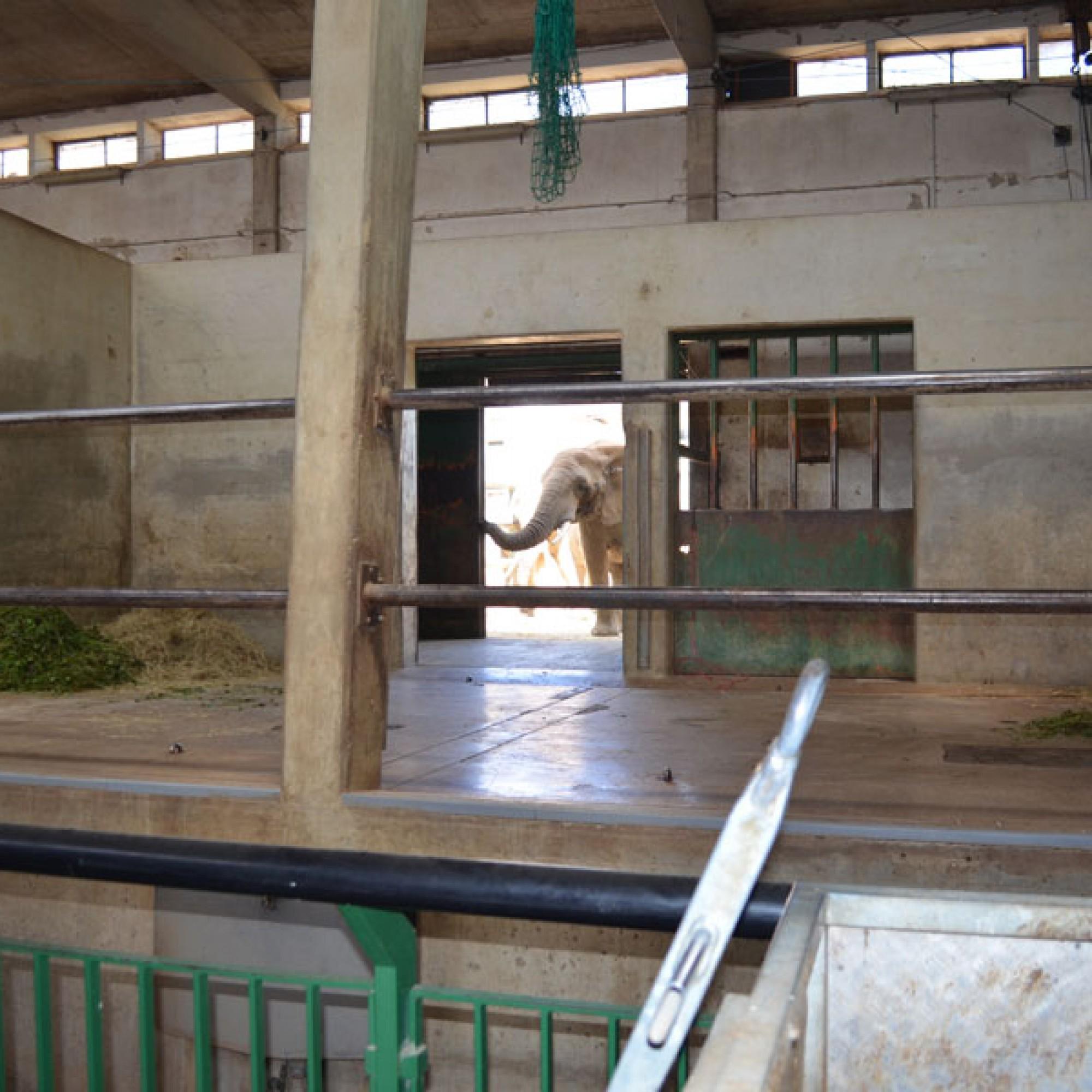 Eine Box im alten Elefantenhaus, das abgebrochen wird (stg)