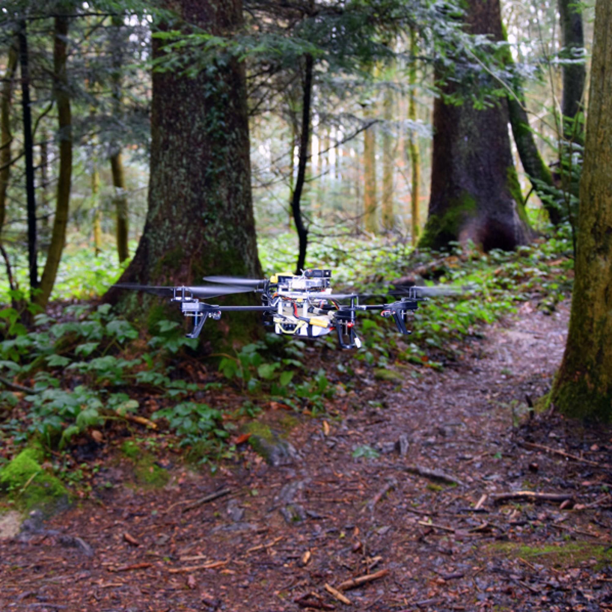 Dank künstlicher Intelligenz findet die Drohne auch im Wald ihren Weg. (zvg)