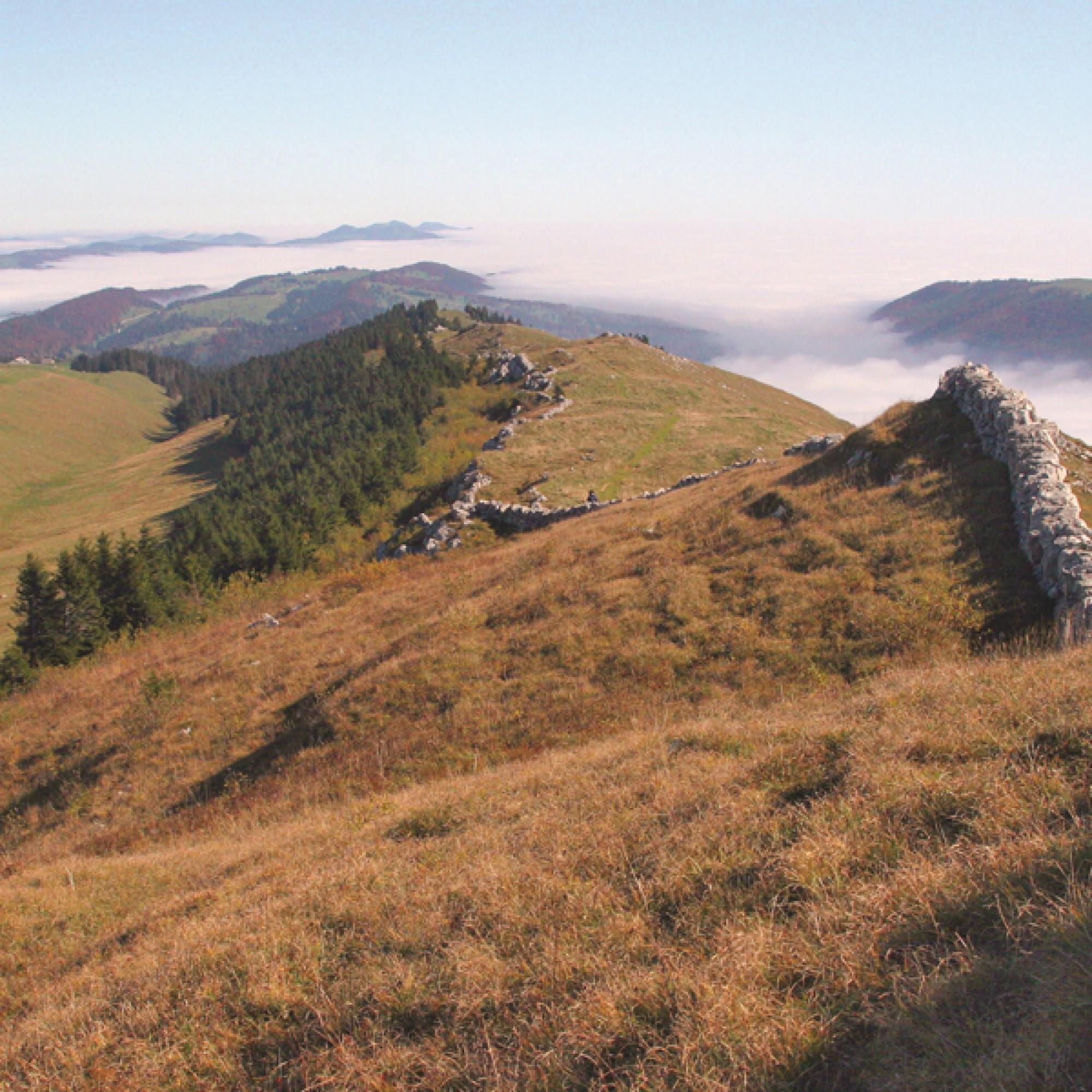 Aussicht auf die Parklandschaft des Chasseral (Bild: Daniel Abort, Parc Régional)