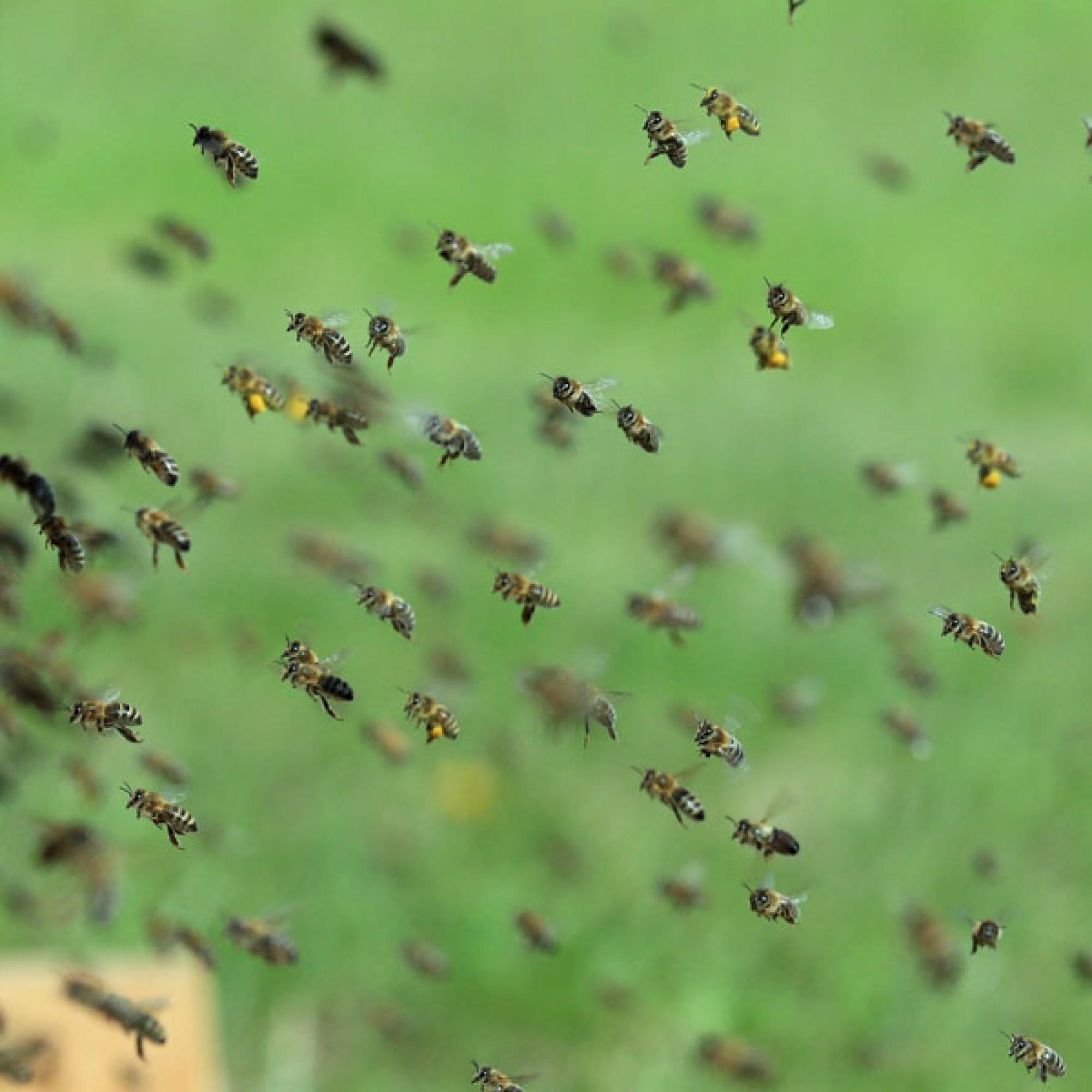 Fleissig wie die Bienen: Herr und Frau Schweizer leisteten rund 800 Milliarden Arbeitsstunden. (Bild: sumx / pixabay.com)