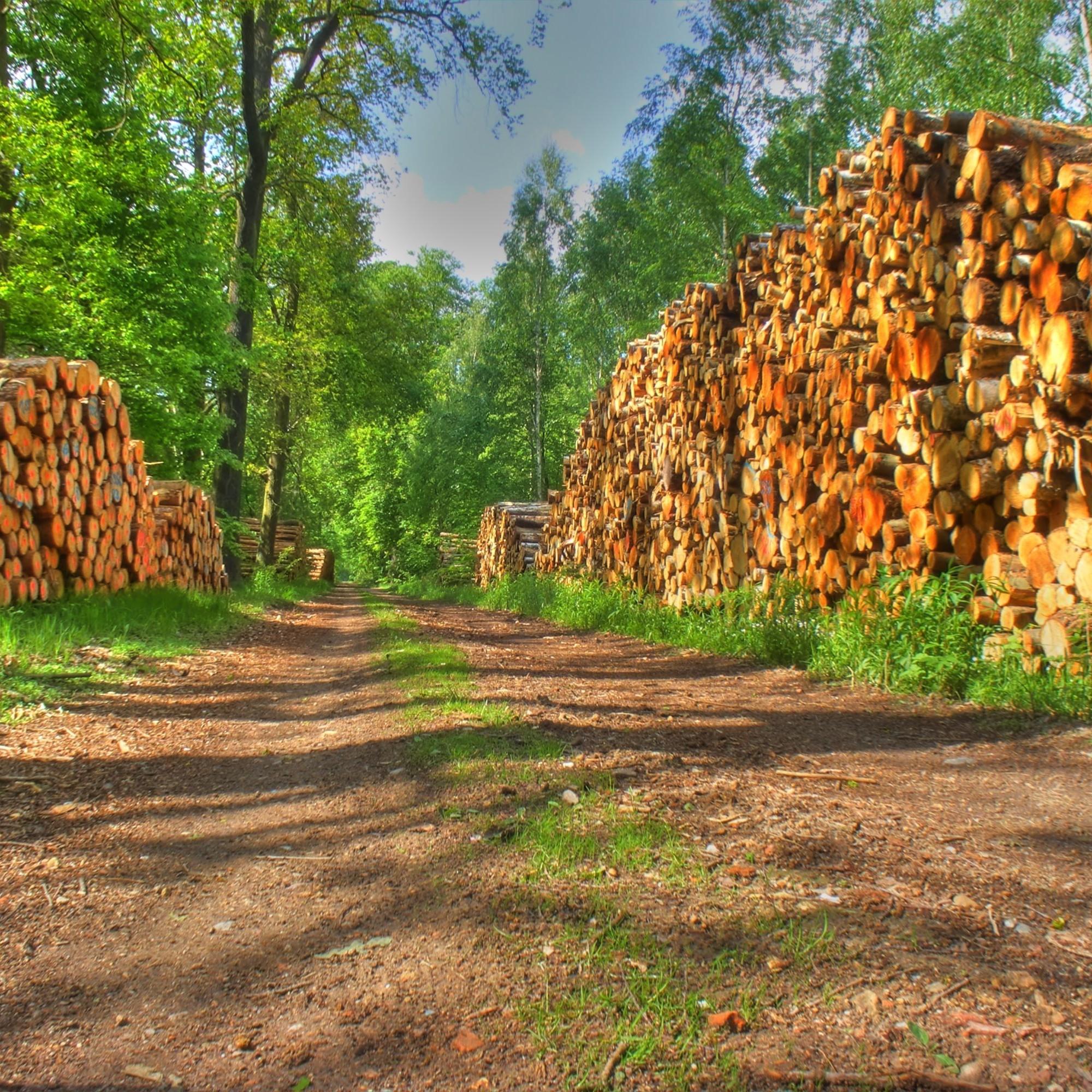 Holzstapel im Wald.