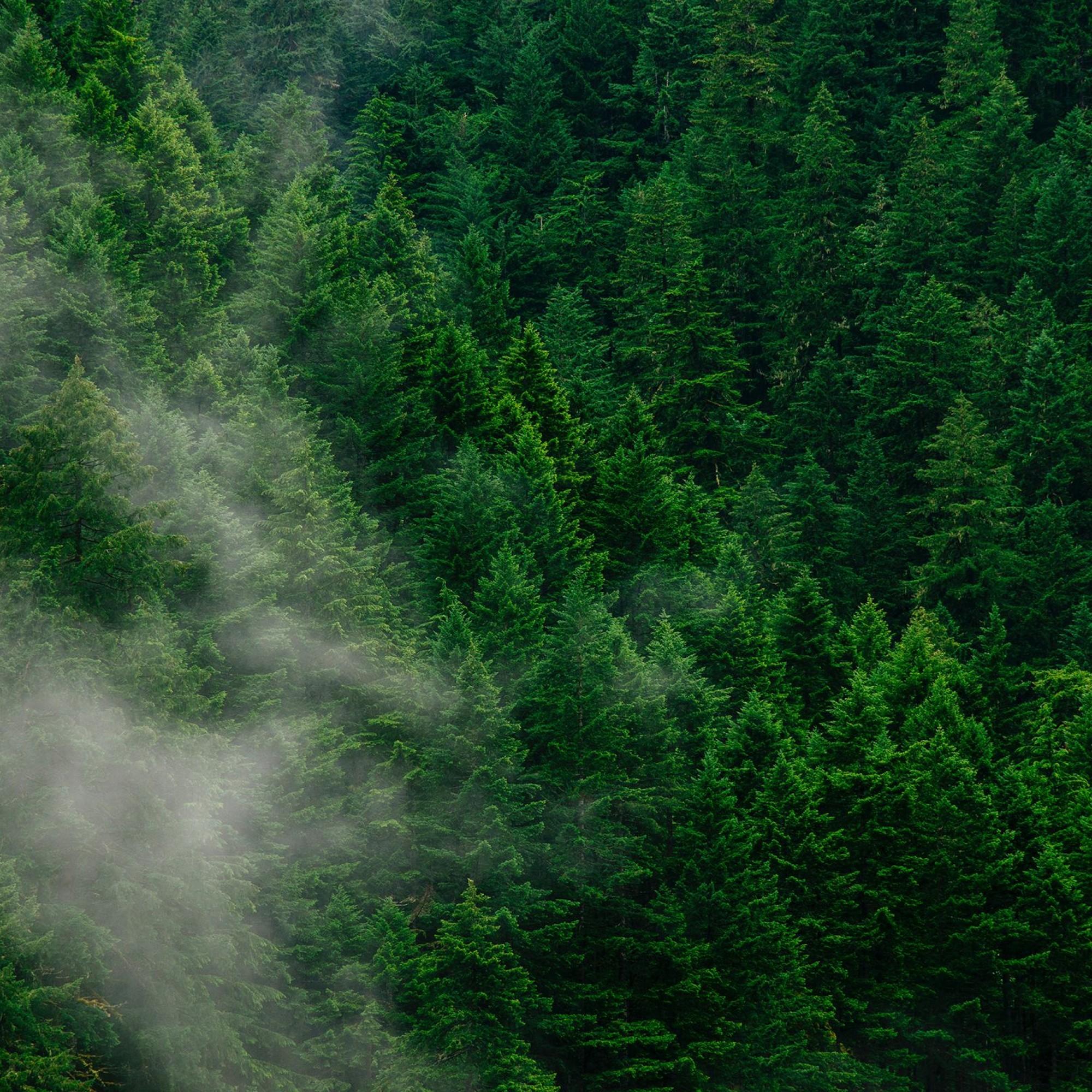 Wald von oben.