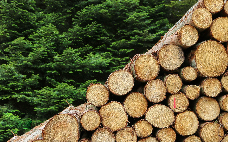 Holz, Symbolbild