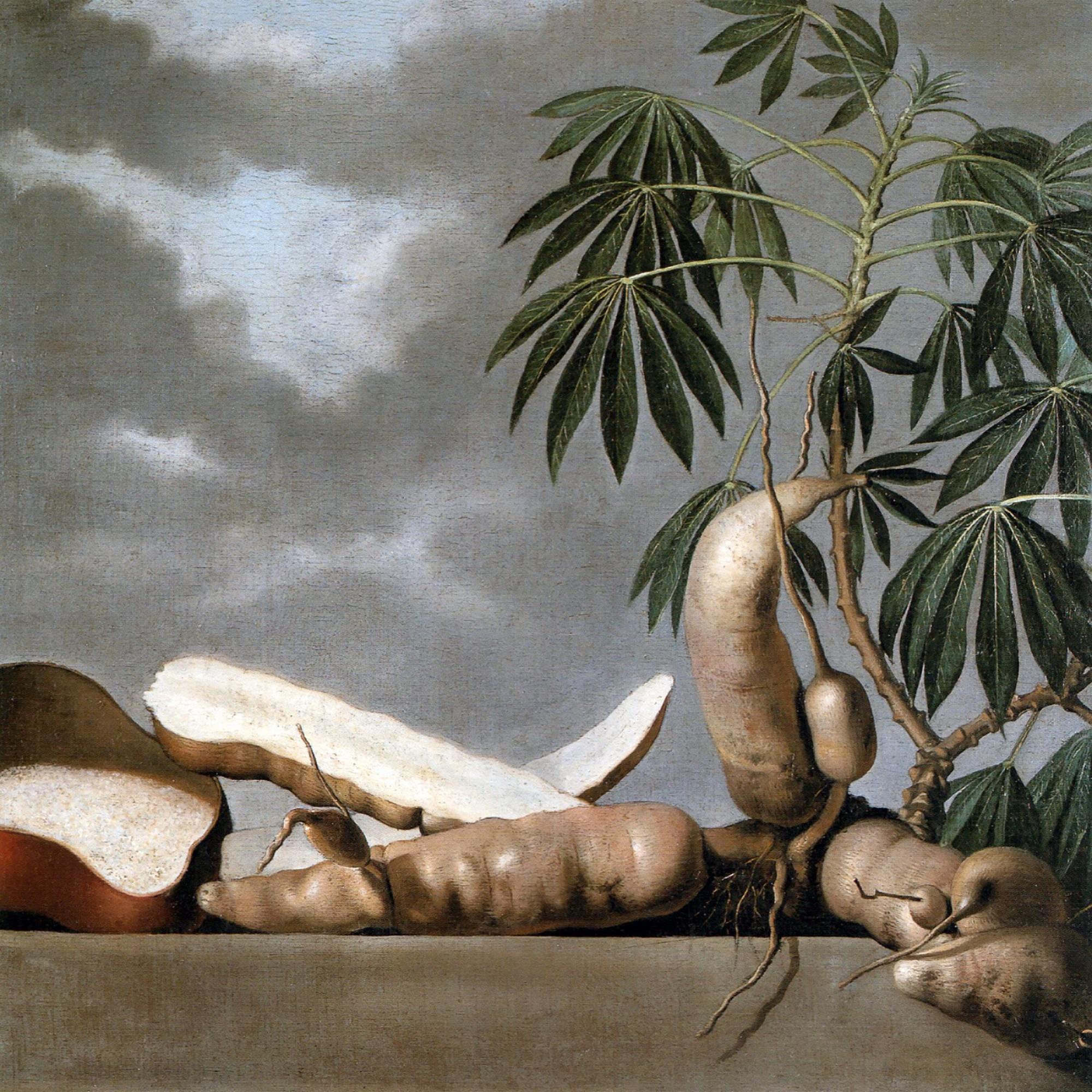 Stillleben mit Maniok-Wurzeln von Albert Eckhout.