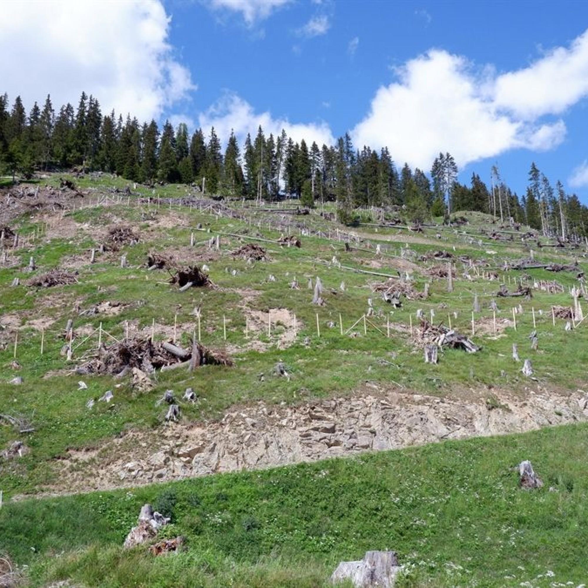 Sturmschadenfläche von Vaia oberhalb von Bergün
