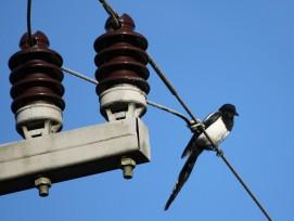 Vogel auf Stromleitung