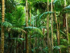 Regenwald Tropenholz
