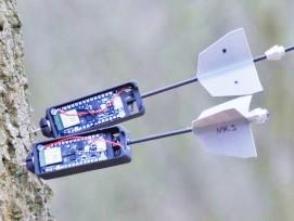 Sensor-Pfeil an einem Baumstamm