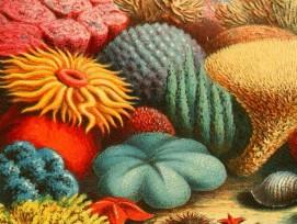Korallen (Symbolbild)