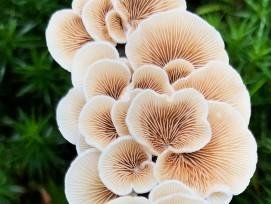 Pilze (Symbolbild)
