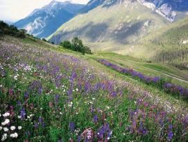 Wiese Blumen Unterengandin