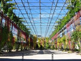 MFO-Park Zürich Oerlikon Begrünung