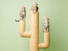 Katzen Kratzbaum Kaktus