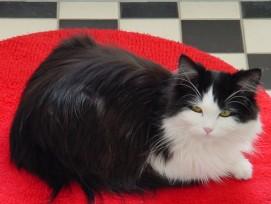 Katze aus Teppich, Symbolbild