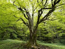Waldreservat Bettlachstock