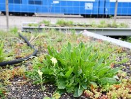 Pflanzentrog für VBZ-Tramhaltestellen in Zürich
