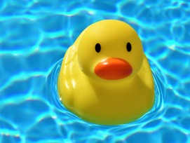 Badeentchen im Pool