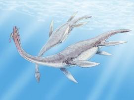 Pleiosaurus (Illustration)