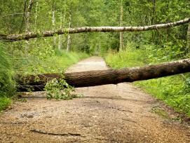 Sturmschaden Baum