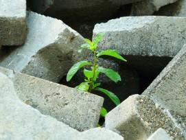 Pflanze (Symbolbild)