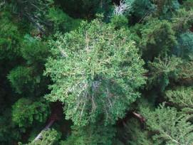 Wald, in den kaum eingegriffen wird, ist wichtig für seltene Flora und Fauna. (Bild: Kecko, flickr, CC)