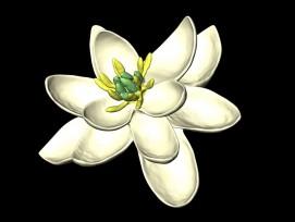 Die Blätter der Urzeitblüte waren drei Kreisen angeordnet, ausserdem war sie zweigeschlechtlich. (zvg)