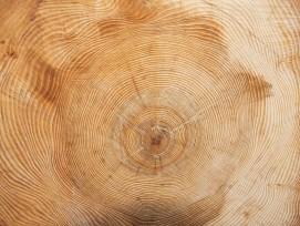 Holzringe, Symbolbild.