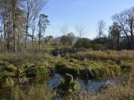 """Revitalisierte Belper Giesse nach den Renaturierungsarbeiten. Die Belper Giesse gehört zum Projekt """"Hochwasserschutz und Auenrevitalisierung Aare / Gürbemündung. Schwere Hochwasser hatten in den Jahren 1999 und 2005 an den Flussläufen im Aaretal grosse Sc"""