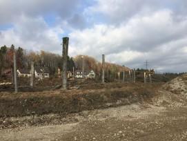 Frisch gerodete Fläche im Giriz: Die noch stehenden Baumstämme werden als Ufersicherung eingebaut.
