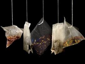 Wissenschaftler haben weltweit tausende Teebeutel vergraben, um das Verständnis des Streuabbaus im Wald zu verbessern.