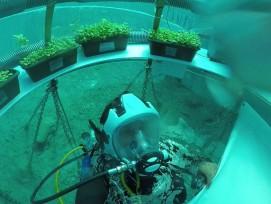 Pflanzen können auch Unterwasser wachsen.